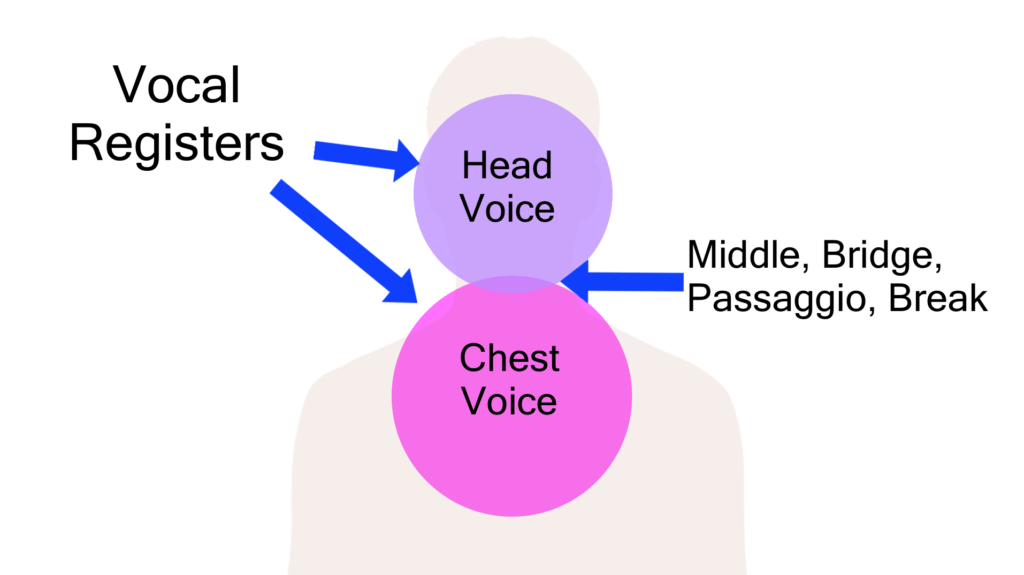 the two vocal registers and the bridge between