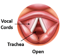The vocal folds open or unapproximated