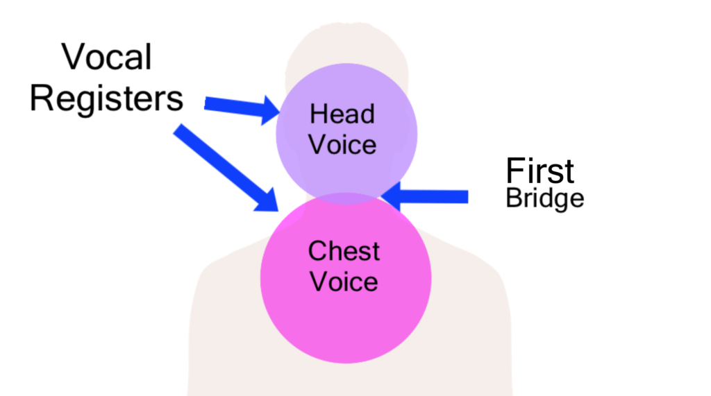 head and chest voice with bridge between (the vocal registers)