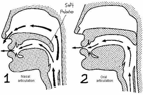 A diagram showing the difference between nasal and oral singing